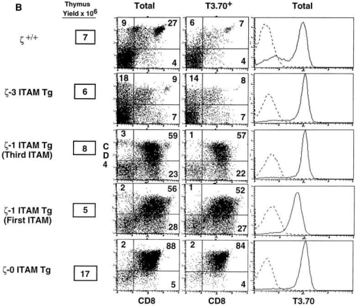 Role of TCRζ–mediated signals in thymocyte  positive and negative selection.  (A) Phenotype of thymocytes  from H-Y+/ζ−/−; ζ Tg female  mice. (B) Phenotype of thymocytes from H-Y+/ζ−/−; ζ Tg  male mice. H-Y+/ζ−/− mice  were reconstituted with transgenes encoding either full-length  ζ chains (ζ-3 ITAM Tg), ζ  chains that contain a single  ITAM (either the first or third,  ζ-1 ITAM Tg) or ζ chains that  lack ITAMs (ζ-0 ITAM Tg).  Data show immunofluorescence  and multicolor FCM analysis of  thymocytes from adult H-2Db  mice. Three-color FCM was  performed on cells stained with  anti–H-Y clonotypic antibody  (T3.70) conjugated to FITC,  anti-CD8–PE, and anti-CD4– biotin, followed by streptavidin– red 670 (16). Two-color plots  show total thymocytes or software-gated T3.70+ thymocytes.  Numbers in the quadrants reflect  the percentage of total thymocytes in that quadrant. Singlecolor profiles (solid lines) depict  T3.70 staining on either  CD4+CD8+ thymocytes (A) or  total thymocytes (B). Dotted  lines reflect staining with negative control antibody.