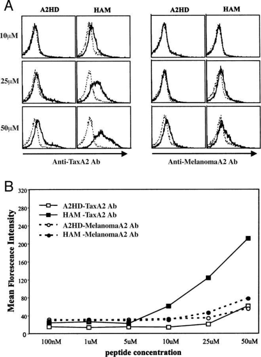 Peptide titration studies using T cells from HAM/TSP patients and A2HD. Peptide–HLA*A201-specific binding of TaxA2-Ab or MelanomaA2-Ab on T cells from HAM/TSP patients or A2HD. These cells were pulsed with various concentrations of HTLV-I Tax11-19 peptide or melanoma gp100–derived G9–154 peptides, incubated with PE-labeled TaxA2-Ab or MelanomaA2-Ab, and then analyzed by flow cytometry. (A) Representative histograms for TaxA2-Ab and MelanomaA2-Ab analysis. Fluorescence intensity for TaxA2-Ab staining of T cells from a HAM/TSP patient was significantly higher than T cells from A2HD when pulsed with Tax11-19 peptide at concentrations >10 μM (solid line). Melanoma gp100 G9-154 peptide was used as control peptide (dotted line). There was no change in fluorescence intensity between a HAM/TSP patient and A2HD when pulsed with melanoma gp100 G9-154 peptide (solid line) or Tax11-19 peptide (dotted line) and stained with MelanomaA2-Ab. (B) Mean fluorescence intensity of Tax11-19 peptide–HLA-A*201 complexes and Melanoma G9-154–HLA-A*201 peptide complexes from A and B. T cells from A2HD were pulsed with the indicated concentrations of HTLV-I Tax11-19 peptide and incubated with PE-labeled TaxA2-Ab (□), or pulsed with the indicated concentrations of melanoma gp100 G9-154 peptide and incubated with PE-labeled MelanomeA2-Ab (○). T cells from HAM/TSP patients were pulsed with the indicated concentrations of HTLV-I Tax11-19 peptide and incubated with PE-labeled TaxA2-Ab (▪), or pulsed with the indicated concentrations of melanoma gp100 G9-154 peptide and incubated with PE-labeled MelanomeA2-Ab (•).
