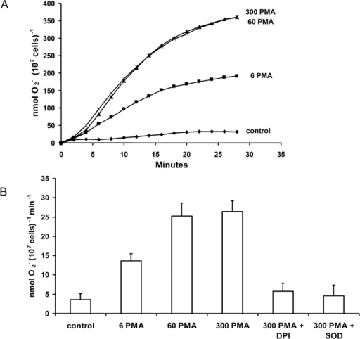 Superoxide production by COSphox cells. (A) The average time course of PMA-stimulated superoxide anion production detected as the reduction of cytochrome c is plotted. Cells (106 cells/ml) were incubated at 37°C in HBSS before the addition of PMA (concentrations of PMA are in nM). Control cells were not stimulated. Data are mean values from four experiments with the error bars removed for clarity. (B) The average maximum rate of O2− production (± SE, n = 4) determined in each experiment in A. Data were collected in 2-min intervals and the rate is given per minute. DPI (6 μM) and 100 μg/ml SOD were added simultaneously with PMA to establish that the reduction of cytochrome c was due to NADPH oxidase and O2−, respectively.