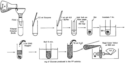 Enzyme assay protocol for cellulase