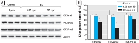 "Effects of BD exposure on histone trimethylation in mouse liver as determined by Western blotting. (A) H3K9me3, H3K27me3, and H4K20me3 levels assessed by immunostaining using specific antibodies against trimethylated histones; equal sample loading was confirmed by immunostaining against histone H3 (""Loading"" row) and histone H4 (data not shown). (B) Densitometry analysis of the immunostaining results shown as change in methylation relative to control after correction for the total amount of each histone in the individual samples; data are presented as mean ± SD (n = 5).*p < 0.05 compared with control."