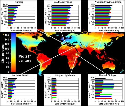 Modeled Safe Winter Chill around the middle of the 21st century averaged over three greenhouse gas emissions scenarios and three Global Climate Models (large map), as well as site-specific estimates of Safe Winter Chill for six growing regions and for 20 climate scenarios, representing four points in time (1975, 2000, mid and end 21st century).Future projections include three greenhouse gas emissions scenarios (B1, A1B and A2) and three Global Climate Models (CSIRO - green bars; HADCM3 - blue bars; and MIROC - red bars). Areas that are more than 5° away from the closest weather station are shaded, because interpolated results are unreliable.