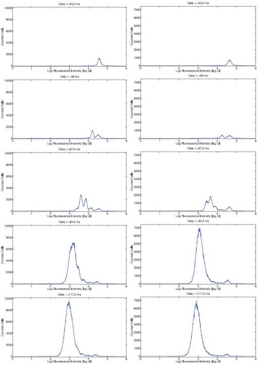 Histogram data for CD8T cells from Donor 1 (left) and Donor 2 (right). An initially unimodal distribution of fluorescence intensity becomes multimodal as cells divide asynchronously. By day 4, subsequent generations of cells are no longer detectable as fluorescence resulting from CFSE has been diluted to the level of background autofluorescence.