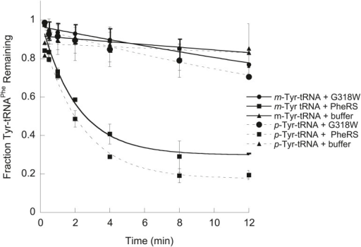 EcPheRS post–transfer editing of mischarged tRNAPhe substrates.Hydrolysis of 0.1 µM E. coli p-Tyr-[32P]-tRNAPhe (dashed lines) or m-Tyr-[32P]-tRNAPhe (solid lines) in the presence of 10 nM wild type EcPheRS (■) G318W EcPheRS (=) or buffer (▲) at 37°C. Data points are the mean of three independent experiments, with errors bars representing ± SD.DOI:http://dx.doi.org/10.7554/eLife.02501.005