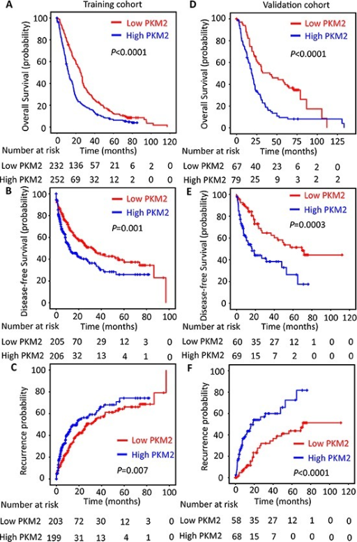 PKM2 expression is reversely correlated with outcomes of HCC patientsThe HCC patients in the training (n = 490) and validation (n = 148) cohort were stratified according to the expression of PKM2. Kaplan–Meier analysis disclosed the relationship of PKM2 expression and the overall survival (A&D), disease-free survival (B&E) and recurrence probability (C&F) of HCC patients (log-rank test).