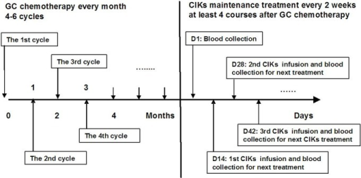 Schematic diagram of GC chemotherapy plus CIK treatment in metastatic NPC patients.All patients underwent 4–6 cycles of gemcitabine plus cisplatin regimen chemotherapy (GC chemotherapy) at 4-week intervals; over 2weeks later, a group of 112 patients received sequential treatment with autologous cytokine-induced killer cells (CIKs) for at least 4 cycles at 2-week intervals.