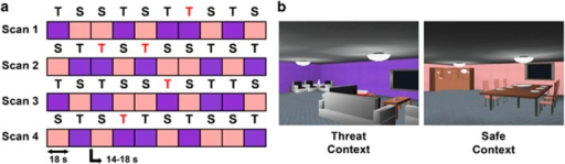Anticipation of unpredictable threat task. (a) During the task, participants explored two contexts, one in which there was a threat of receiving a transcutaneous stimulation at any time (T), and one in which they were safe from receiving any stimulation (S). The acronyms colored in red denote contextual epochs in which unsignaled electrical stimulations were administered, which were limited to one to two threat contexts per run of fMRI scanning. (b) Still pictures of the computer-simulated rooms that served as threat and safe contexts. fMRI, functional magnetic resonance imaging.