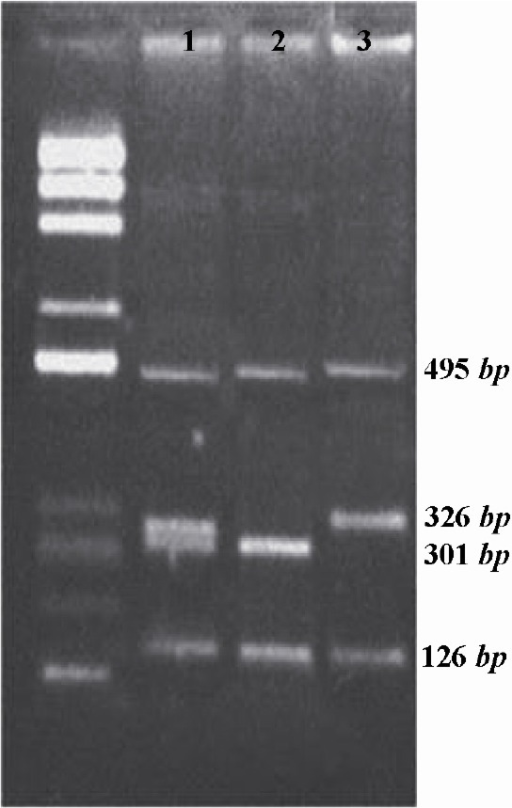Multiplex PCR, first lane is a 100 bp DNA ladder. Lane 1 doesn't have any deletion. Lane 2 has sY84 deletion and lane 3 has sY134 deletion.