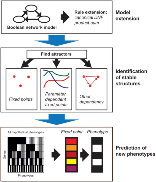 "Phenotype analysis using the Boolean Network Extension (BNE).The application of the BNE to a given Boolean network (BN) can be divided into three basic steps: Model extension (top), identification of stable structures (middle) and mapping to phenotypes (bottom). In the model extension step (top) the rules of the BN are transformed to the rules of the BNE by converting the rules of the BN to canonical disjunctive normal form (DNF) and then to product-sum fuzzy logic (DNF product-sum extension, details see section Extension of Boolean networks). In the ""identification of stable structures""-step (middle) the extended BNE is simulated for a large number of random inputs. The resulting approximated attractors can either be fixed points approximated by point clouds, fixed points depending on one or multiple parameters or different dependencies. Finally, new phenotypes are identified step (bottom) by mapping the fixed points to their nearest hypothetical phenotype."