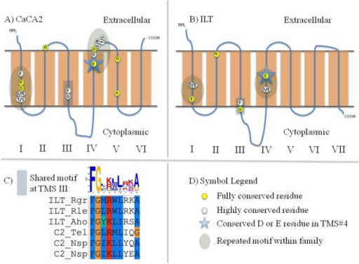 Schematic diagrams depicting motifs and highly conserved residues within and between the CaCA2 (C2) and ILT families.Highly conserved residues were identified using alignments generated from Mafft. In Part C, the MEME/MAST Suite was used to generate the graphical logo, and the alignment was presented using the ClustalX2 user interface with the associated Mafft multiple sequence alignment (MSA). A) Schematic diagram of CaCA2 proteins. B) Schematic diagram of ILT proteins. C) Graphical representation of the shared motifs depicted in Part A and Part B. D) Symbol Legend.