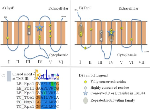 Schematic diagrams depicting motifs and highly conserved residues within and between the LysE (LE) and TerC (TC) families.A) Schematic diagram of LysE proteins. B) Schematic diagram of TerC proteins. C) Graphical representation of the shared motifs depicted in Part A and Part B. D) Symbol Legend.