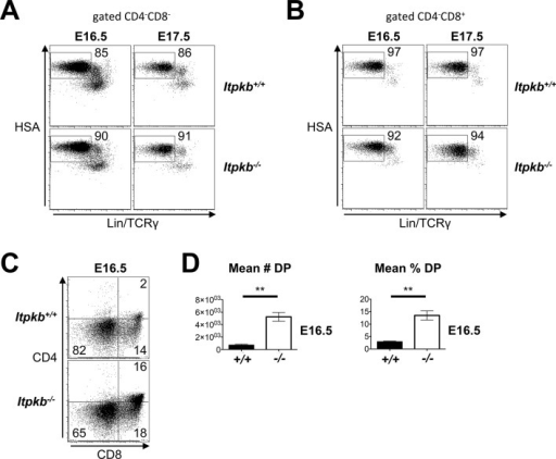 Raw and replicate data related to Figure 5C.(A,B) HSA and combined Lin/TCRγ expression on the DN (A) and CD4-CD8+ (B) cells in Figure 5C, left panel. The HSAhighLin-TCRγ- gates in (A) were analyzed for DN cell subsets in Figure 5C, center panel. The HSAhighLin-TCRγ- gates in (B) denote ISP. ISP comprise ≥92% of CD4-CD8+ cells in E16.5 and E17.5 fetal thymi in both Itpkb+/+ and Itpkb-/- mice. (C) CD4 and CD8 expression on Itpkb+/+ or Itpkb-/- fetal thymocytes from embryos harvested on day 16.5 of embryogenesis (E16.5) from the same mother. Numbers denote % cells per gate. (D) Mean ± SEM numbers or % of DP cells in E16.5 Itpkb+/+ or Itpkb-/- fetal thymi. Significance of the indicated comparisons was analyzed as in Figure 2 (nWT = 3, nKO= 5).DOI:http://dx.doi.org/10.7554/eLife.10786.008
