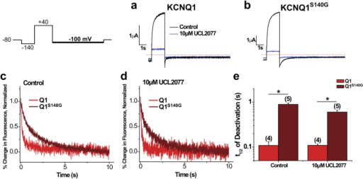 UCL2077 inhibition confirms that KCNQ1S140G slow voltage sensor deactivation independent of channel opening.The following protocol was used: from a prepulse of −140 mV, an activating pulse was applied at +40 mV, followed by a repolarizing step to −100 mV. Channels were held at −80 mV. This protocol was used before and after inhibition of current with 10 μM UCL2077. (a,b) Current before and after inhibition with UCL2077 for KCNQ1 (a) and KCNQ1S140G (b). (c,d) Normalized fluorescence deactivation traces at −100 mV for KCNQ1 (red) and KCNQ1S140G (dark red) in drug-free control (c) and in 10 μM UCL2077 (d). (e) Time to half deactivation (t1/2) of fluorescence. Data are shown as mean ± SEM (error bars). *P < 0.05.