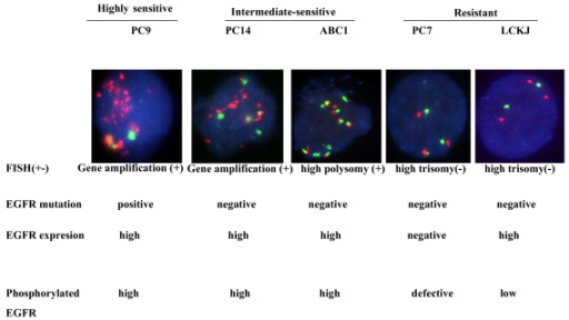 Fluorescence in situ hybridization fish analyses of l for Fish test for cancer