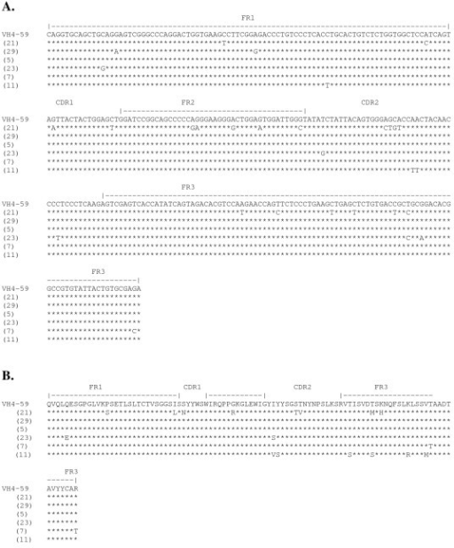 Nucleotide sequences of the VH genes encoding xenoantibodies in the VH4 family. The IGVH4-59 germline progenitor encodes a proportion of xenoantibodies in patients mounting active xenoantibody responses. Shown are the sequences of immunoglobulin genes encoding xenoantibodies in patients at day 10 after placement on a bioartificial liver containing porcine hepatocytes. (A.) The nucleic acid sequence of genes encoding xenoantibodies in the VH4 family are most closely related to the human VH4-59 germline gene.Stars indicate identities in nucleic acid sequence. Clone numbers are indicated in parenthesis. Nomenclature of the germline genes, alignments and numbering are based on the human immunoglobulin germline gene table [68]. (B.) Translated amino acid sequences of VH4 genes encoding xenoantibodies compared with the amino acid sequence of the closest human germline progenitor VH4-59.