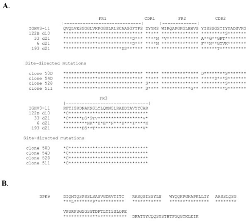 Amino acid translation of the sequences of genes encoding human xenoantibodies. (A.) The amino acid translation of immunoglobulin heavy chain genes in the VH3 family encoding xenoantibodies at days 10 and 21 following exposure to porcine hepatocytes.  The sequences at day 10 are expressed in germline configuration, however, the sequences at day 21 demonstrate the onset of mutations. Site-directed mutations were introduced into the germline gene in positions shown. (B.) The amino acid sequence of the genes encoding the light chain of a human xenoantibody that binds to the gal carbohydrate is shown compared with the closest germline progenitor, DPK9.