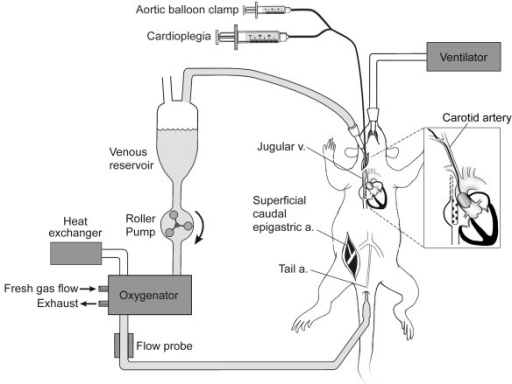 Schematic Diagram Of Rat Cpb Apparatus And Surgical Pre Open I