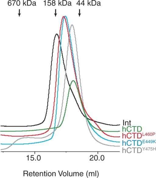 Size exclusion chromatography of the isolated hCTD and mutant derivatives. Gel filtration traces of hCTD (green), hCTDY475H (grey), hCTDL460P (red) and hCTDE449K (light blue) and wild-type Int (black). The calculated momomeric form of the hCTD is 54 kDa. The apparent molecular weights for hCTD, hCTDE449K, hCTDL460P and hCTDY475H were 52 kDa, 79 kDa, 84 kDa and 55 kDa, respectively. Full length Int eluted with an apparent molecular weight of 121 kDa (predicted monomer is 67 kDa).