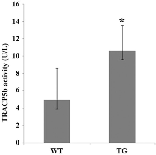 Serum levels of TRACP5b are elevated in IKK2SSEEMYELO -tg mice.Serum was collected from wild type (9) and transgenic (8) mice and levels of the enzyme TRACP5b (U/L +/−SE) were measured. * denotes p<0.05.