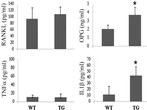 Expression levels of IL-1β and OPG are higher in the serum of IKK2SSEEMYELO -tg mice.IL-1β, OPG, RANKL and TNFα levels in the serum of wild type and transgenic mice were measured using commercial ELISA kits. * denotes p<0.05 (IL-1β) and p<0.05 (OPG).