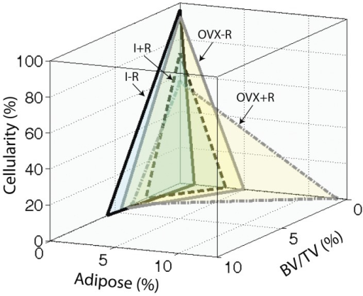 3-D illustration of interrelationships among the three tissue components of bone and marrow: hemopoietic component measured by cellularity, stromal damage component measured by marrow fat or adipose content, and osseous component measured by the cancellous bone BV/TV%.Cumulative increases in marrow fat after irradiation, in the absence of ovarian function (10 fold) was not reflected by equivalent losses of either cancellous bone or hematopoietic cellularity. The proportionality of changes in these tissue components were maintained among irradiated intact mice.