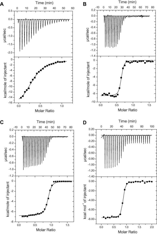 Calorimetric analysis of interaction between PanD and PanZ. (A) Representative titration of 400 μM CoA into 60 μM purified PanZ reveals a sub-stoichiometric number of available binding sites. (B) Representative titration of 394 μM PanD-T57V into 59 μM PanZ without added CoA. (C) Titration of 394 μM PanD-T57V into 59 μM PanZ after addition of 110 μM CoA to each sample. (D) Titration of 348 μM PanZ into 31 μM PanD-T57V after addition of 110 μM CoA to each sample.