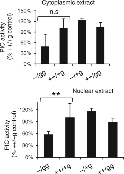 In vitro integration activities of PICs. Strand transfer activities, normalized to the levels of HIV-Luc substrate DNA in the extracts, are plotted as percent activities in WT E9 cell extracts. Error bars represent the variation obtained from duplicate sets of PCR assays; results are representative of those observed in two (cytoplasmic PICs) to three (nuclear samples) independent experiments. **P < 0.01 as determined by one-tailed Student's t-test; the lack of statistical significance in the cytoplasmic samples is in part due to the extent of variation among duplicate PCR samples.