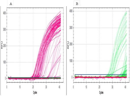 Amplification curves from multiplex real-time PCR assays.Figure 1A. Real-time PCR amplification curves for body lice using a partial Phum_PHUM540560 gene in the FAM channel (495–520). Figure 1B. Amplification curves for head licee louse using a partial Phum_PHUM540560 gene in the VIC channel (522–544).