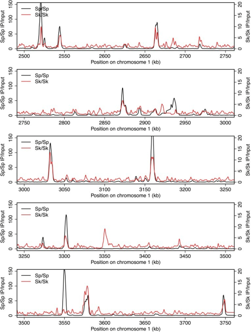 DSB hotspots in Sk and Sp.We used ChIP-chip of Rec12-FLAG from rad50S Sk meiotic cultures to assay DSB hotspots and compared the Sk profile (red) to the published DSB hotspot maps of Sp (black) (Fowler et al., 2013). Traces are shown in Figure 2—figure supplements 1–11.DOI:http://dx.doi.org/10.7554/eLife.02630.007