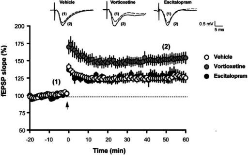 Vortioxetine enhanced theta burst long-term potentiation (LTP) in hippocampal slices.Representative traces of field excitatory post-synaptic potential (fEPSP) recordings from vehicle-treated, vortioxetine-treated and escitalopram-treated slices are shown on top of the graph. Each trace is the mean of five sweeps taken either immediately before (dashed line marked with (1) or 50 min after (solid line marked with (2)) theta-burst stimulation (TBS). TBS, marked with an arrow in the time course graph, induced a long-lasting increase in the slopes of fEPSPs. For each time point, fEPSP slopes were calculated from either vehicle-treated (n=17 slices from 12 animals), vortioxetine-treated (n=14 from nine animals) or escitalopram-treated slices (n=5 slices from four animals) and expressed as % of baseline. Data are shown as the mean±standard error of the mean (SEM). Perfusion of hippocampal slices with vortioxetine for 30 min prior to TBS increased LTP without affecting baseline transmission (p=0.0017 vortioxetine vs vehicle, two-way analysis of variance (ANOVA) F(2,38)=7.548)). Escitalopram had no effect on LTP (p>0.05).