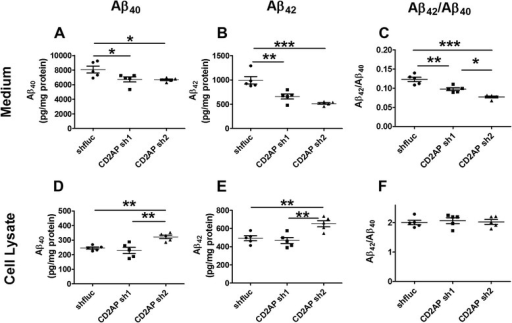CD2AP shRNAs decreased extracellular Aβ levels in cell culture. N2a-695 cells were transfected with CD2AP shRNAs or control shRNA. (A-C) Aβ40, Aβ42 and Aβ42/Aβ40 ratio in the cell culture medium. (D-F) Aβ40, Aβ42 and Aβ42/Aβ40 ratio in the cell lysates (n = 5/group; *, p < 0.05, **, p < 0.01, ***, p < 0.001, one-way ANOVA followed by Tukey test).