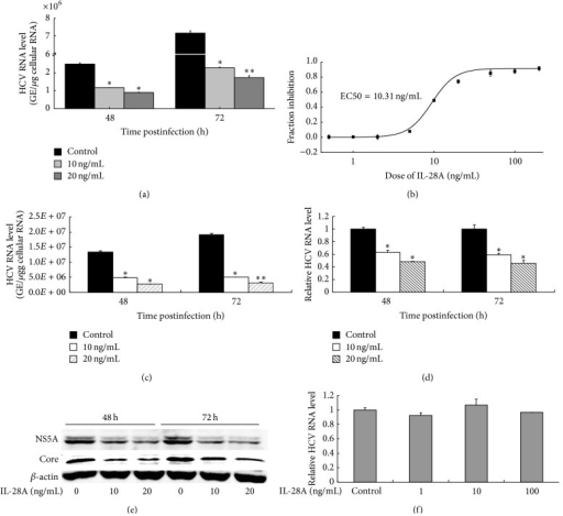 IL-28A suppresses HCV replication. Huh7.5 (a) and HLCZ01 (c) cells were infected with HCV (MOI = 0.1) for 6 h at 37°C. The medium was then removed and cells were incubated with IL-28A for 48 or 72 h at 37°C. (b) HCV-infected Huh7.5 cells were incubated with different doses of IL-28A for 72 h. (d) FL cells were incubated with IL-28A for 48 or 72 h. ((a), (b), (c), and (d)) Intracellular viral RNA was detected by real-time PCR. The results are the average of three independent experiments performed in triplicate. (e) Huh7.5 cells were treated as described in part (a). NS5A and core proteins were detected with western blot. (f) Huh7.5 cells were pretreated with or without IL-28A for 12 h. The medium was then removed, and cells were inoculated with HCV (MOI = 0.1) for 6 h at 37°C. Intracellular viral RNA was detected by real-time PCR.