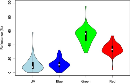 Univariate violin plots showing the reflectance for all fruits in each of the four colour reflectance bands.Ultraviolet (300-400nm), blue (400-500nm), green (500-600nm), and red (600–700 nm). For each reflectance band, the white dot corresponds to the median, while the lower and upper end of the thick black bars correspond to the 25th and 75th percentiles. The width of the violin plot represents the density of the distribution.