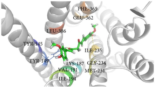 Binding of curcumin within the active site of GCGR.