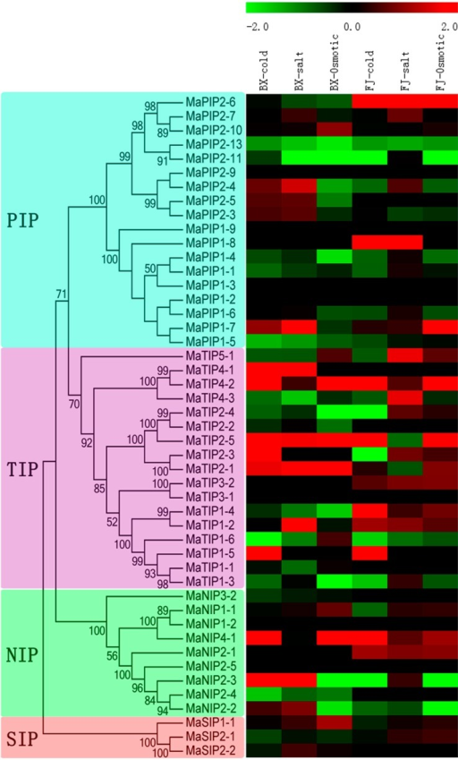 Expression profiles of MaAQP genes in leaves of two cultivated banana varieties responding to cold, salt, and osmotic stresses. Log2-based FPKM values were used to create the heat-map with MeV software. The scale represents relative signal intensity of FPKM values.