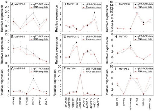Relative mRNA levels of 9 MaAQP genes in BX and FJ were determined by qRT-PCR analysis. (A–C) expression patterns of MaPIP2-7, MaPIP1-4 and MaSIP1-1 in different tissues of BX and FJ. The mRNA fold difference was relative to that of BX-root samples used as calibrator; (D–F) expression patterns of MaPIP1-6, MaPIP2-10 and MaTIP4-1 in different stages of fruit development and ripening in BX and FJ. The mRNA fold difference was relative to that of BX-0DAF samples used as calibrator; (G–I) expression patterns of MaPIP2-6, MaTIP2-1 and MaTIP4-2 in response to cold, salt and osmotic stresses in BX and FJ. The mRNA fold difference was relative to that of untreated samples used as calibrator. Log2-based values were used to display differential expression results. Data are means ± SD of n = 3 biological replicates.