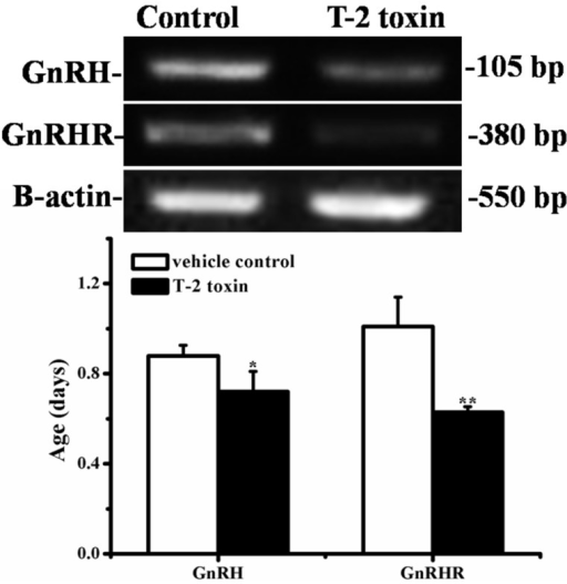 The expressions of hypothalamic GnRH and pituitary GnRHR by RT-PCR (BioRad, Hercules, CA, USA) analysis. The upper picture shows the gel electrophoresis of the RT-PCR products for the hypothalamic GnRH and pituitary GnRHR amplified from the total RNA isolated from the vehicle control and T-2 toxin treatment groups in Experiment II. The results of GnRH and GnRHR were normalized to β-actin level. Data are expressed as the means ± SD of 10 animals. *p < 0.05, **p < 0.01 versus vehicle control group.