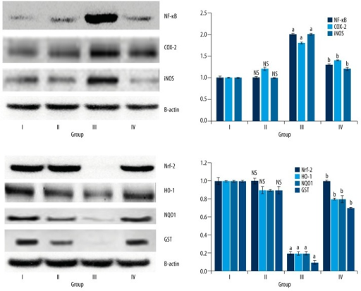 Plumbagin modulates NF-κB and Nrf-2 signaling pathway. NF-κB and Nrf-2 target proteins were determined by Western Blot. a. p<0.05, when compared to sham group. b. p<0.05, when compared to MI/R rats. Group I (sham); Group II (plumbagin); Group III (MI/R rats); Group III (plumbagin +MI/R). Results are given as the mean ±SEM for 10 rats in each group. (One-way ANOVA followed by Tukey's multiple comparison).