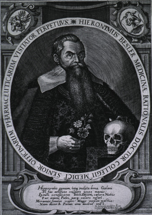 <p>Half-length, standing, right pose, one hand on skull, other holding flower.</p>