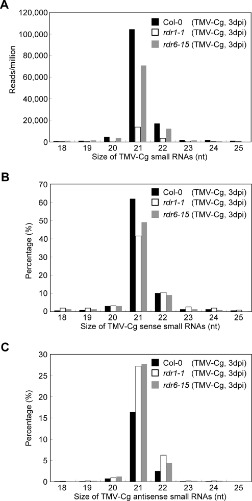 Characterization of TMV-Cg-derived small RNA populations.(A) Size distribution of viral small RNA populations. Proportions of viral siRNAs derived from the genomic sense (B) and antisense (C) strands in each size class are also shown as the percentage of the total viral small RNA reads. Data from different source libraries are represented in black (Col-0; TMV-Cg 3dpi), white (rdr1-1; TMV-Cg 3dpi), and grey (rdr6-15; TMV-Cg 3dpi) histograms, respectively.