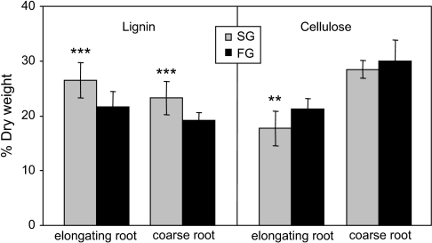 Lignin and cellulose concentrations in root fractions. (A) Klason lignin of elongating and coarse root fractions and (B) ADF cellulose of elongating and coarse root fractions (both in % dry weight). Histogram means and SD were determined from n=14–15 replicates. The two-sample t-test was used to determine significance of differences between clone means, indicated by asterisks above the SG histogram bars (**P <0.01; ***P <0.001).