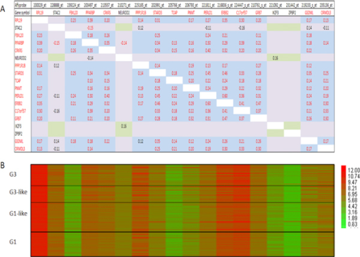 Correlation matrix for ERBB2 amplicon (Uppsala cohort). A -- correlation matrix (Pearson, α = 1%); B - heat map analysis in different breast cancer grades.