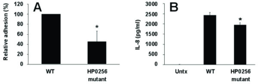 The HP0256 mutant has lower adhesion ability compared to the wild-type and significantly induces a weaker IL-8 secretion in AGS cells. Panel A shows that the HP0256 mutant adheres significantly less to the AGS host cells compared to the wild-type. Panel B shows that the HP0256 mutant induces a lower IL-8 secretion of AGS cells compared to the wild-type cells. (*) indicates results with a p-value of less than 0.05.