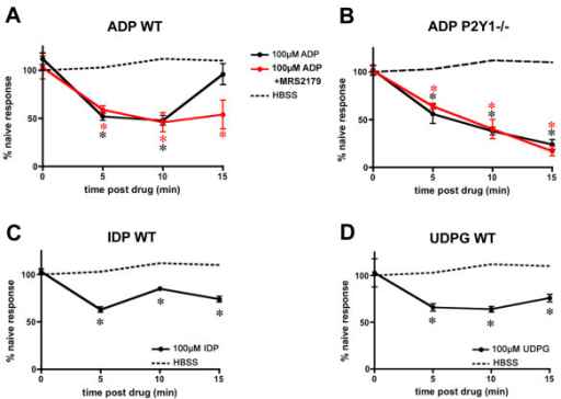 The inhibitory effect of ADP is enhanced in the absence of P2Y1 signaling. The magnitudes of depolarization-evoked Ca++ transients in sensory neurons were measured before, and 5, 10 and 15 minutes after agonist application. Ca++ transients were not affected by application of buffer alone (dashed lines), but were significantly reduced after application of ADP (A-B), IDP (C), or UDPG (D; solid lines). Inhibition was prolonged by application of the selective P2Y1 antagonist MRS2179 (A) and in neurons from P2Y1-/- mice (B). There was no effect of MRS2179 in P2Y1-/- neurons (B). Values are mean ± SEM; n = 10 mice/timepoint each treatment. *p < 0.02 versus control for each treatment.