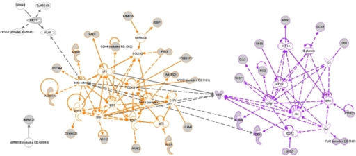 Network analysis of CTC-profile genes indicted two main functional networks: a cellular survival/proliferation associated network (colored orange) and a cellular migration/angiogenesis related network (colored purple).CTC-profile genes are indicated by grey symbols.