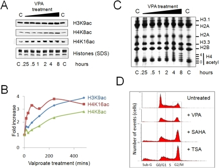Changes in bulk histone acetylation and cell cycle progression induced by HDACi.(A) Western blots, and (B) quantification of the changes induced in H3K9ac, H4K8ac, H4K16ac abundance upon VPA treatment (5 mM, 8 hours). (C) Triton-acid-urea gel of histones isolated from control (C), or VPA–treated cells over the same time course. Histone H4 associated with none, one or more acetyl residues are indicated. (D) HDACi treatment impacts on the cell cycle. Fluorescence activated cell sorting of untreated and VPA (5 mM), SAHA (2.5 µM) or TSA (165 nM) treated cells (8 hours). Cells associated with distinct stages of the cell cycle are indicated. Cells labelled Sub-G are either dead or apoptotic.