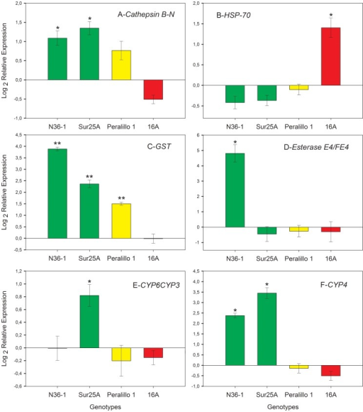 Quantification of relative expression levels in four genotypes on suitable (pepper) and unfavorable (radish) hosts.The results represent the relative mRNA expression, with transcripts expressed by the aphids on pepper as calibrator and on radish as interest sample. Data were normalized for variation using GADPH expression. The green bars correspond to S genotypes (sensitive; N36-1 and Sur25A), the yellow bar corresponds to the SR genotype (simple resistant; Peralillo 1) and the red bar corresponds to the MR genotype (multiple resistant; 16A). Data represent mean ± SE of two different experiments, with three technical replicates each case.*p<0.05 and **p<0.01 indicate a significant difference compared to 1, used as a reference value for no change in expression using a t-test. Gene abbreviations: (A) cathepsin B-N, cathepsin B clade N; (B) HSP-70, heat shock protein 70; (C) GST, glutathione S-transferase; (D) Esterase E4/FE4, carboxylesterase type E or FE4; (E) CYP6CY3, cytochrome p450family CYP6CYP3; (F) CYP4, cytochrome p450 family CYP4.