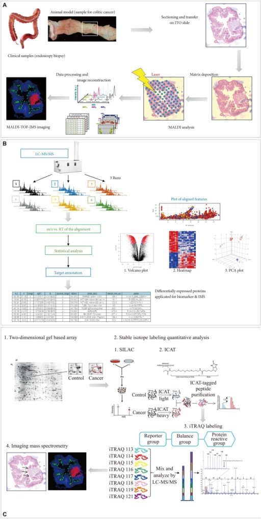 Advances in molecular imaging technology for future medicine in gastroenterology, and cDNA microarray and imaging mass spectrometry (IMS). (A) Flow for IMS as exemplified in colitic cancer. (B) Label-free protein quantification scheme for either biomarker discovery or IMS. (C) Label-based protein quantification scheme using isobaric tags for relative and absolute quantification (iTRAQ) labeling. ITO, indium tin oxide; MALDI-TOF-IMS, matrix-assisted laser desorption/ionization time-of-flight imaging mass spectrometry; LC-MS/MS, liquid chromatography-tandem mass spectrometry; RT, chromatographic retention time; m/z, mass-to-charge ratio; PCA, principal components analysis.