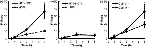 Cell uptake of MT1-hIC7L. (a,b) C6 (a) or MCF-7 cells (b) were treated with MT1-hIC7L or hIC7L and the fluorescence intensities were acquired for 6 h. Data are expressed as the FI ratio (mean ± SD) for 4 samples. Comparison between the MT1-hIC7L- and hIC7L-treated groups was performed with two-way factorial anova followed by Tukey–Kramer test (*P < 0.01 vs hIC7L). (c) The mean fluorescence intensity of C6 cells treated with (dotted line) or without Col I (solid line) for 6 h at 0.5, 1, 3 and 6 h after incubation with MT1-hIC7L. Data are expressed as%Intensity/mg protein (mean ± SD) for 4 samples. Comparisons between the Col I-treated (Col I [+]) and Col I-untreated groups (Col I [−]) were performed with two-way factorial anova followed by the Tukey–Kramer test (*P < 0.05 vs Col I [+]).
