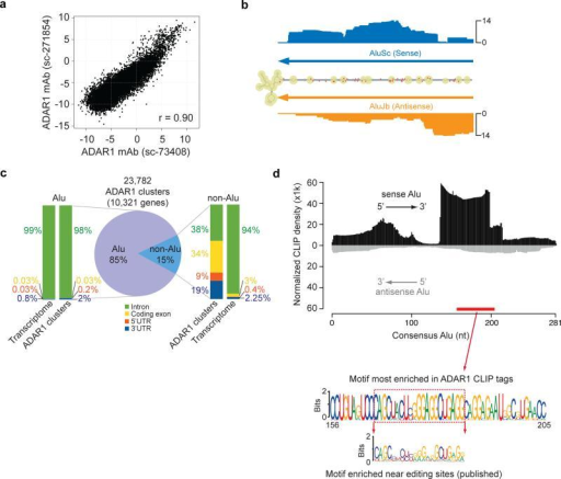 CLIP-Seq identifies ADAR1 binding sites in >10,000 human genes(a) Reproducibility of ADAR1 CLIP tags using two different antibodies. Each dot in the scatter plot represents log2 enrichment relative to the background abundance measured by polyA+ RNA-Seq for a RefSeq transcript. (b) CLIP tag distribution in the 3' UTR of the PSMB gene. The secondary structure of this region is shown as predicted by RNAfold. The number of CLIP tags is shown for each corresponding position in the folded structure, together with the location of two Alu sequences (inverted-repeats). Known editing sites (DARNED database) are labeled with red dots. (c) Genomic distribution of reproducible ADAR1 CLIP sites. Similar distribution of nucleotides in the entire transcriptome is shown as a reference. (d) Alignment of CLIP reads to the consensus Alu sequence. The CLIP tag density was normalized against expected tag density obtained from simulated reads to represent overall sequence enrichment of all the relevant Alus. Alignment to the sense Alu consensus and antisense Alu consensus was carried out separately. Given their strand-specific nature, CLIP reads were aligned to either the sense or antisense Alu unambiguously. The motif most enriched in ADAR1 CLIP tags is shown (based on an independent motif search within CLIP clusters by MEME), which is located in the sense Alu as labeled by the red bar. The motif enriched near editing sites in U87MG cells discovered previously 21 is also shown for comparison purpose.